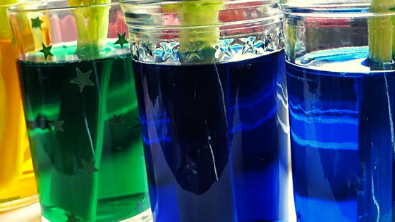 Blog Banner Simple Science Experiment for Kids- Coloring Celery